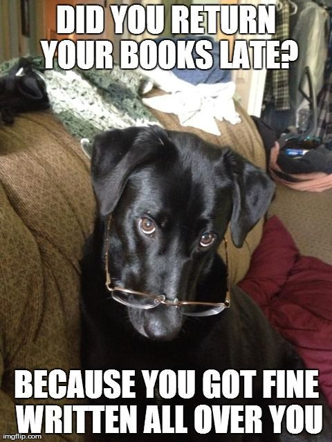 funny ROFL dog pic_2