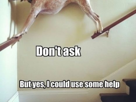 funny ROFL dog pic_4